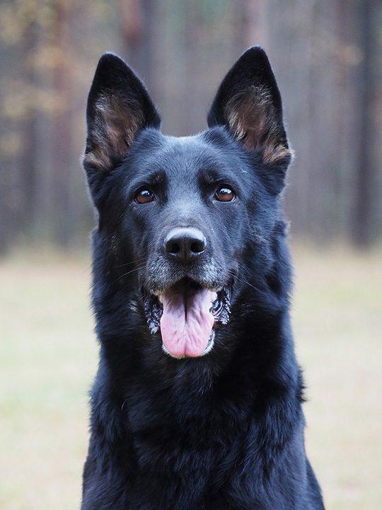 Jaffa s portree1 koerad