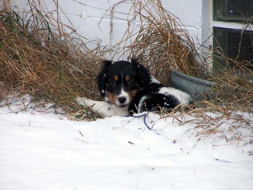 puppy 2645449 1920 min