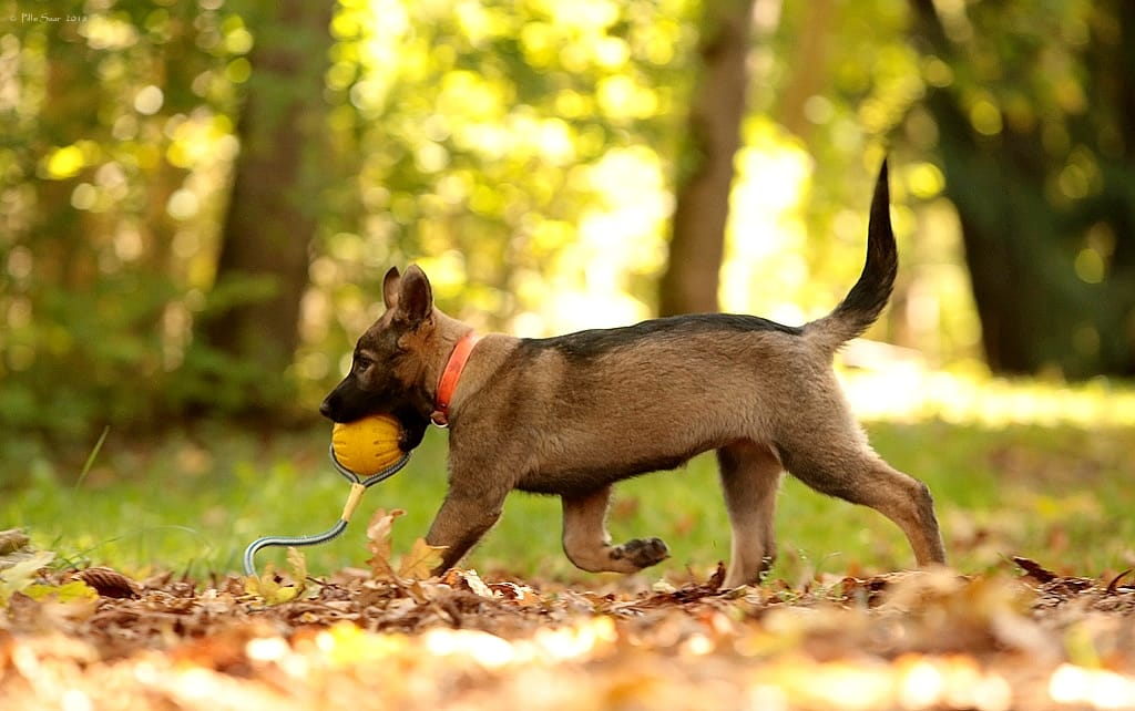 väike Estrellest Queenwolf Kutchi Mutchi 8